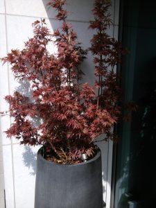 Für die Terrasse - Pflanzgefäße und Bäume