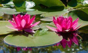 Exklusive Aquarien und Gestaltungen von Gärten und Terrassen