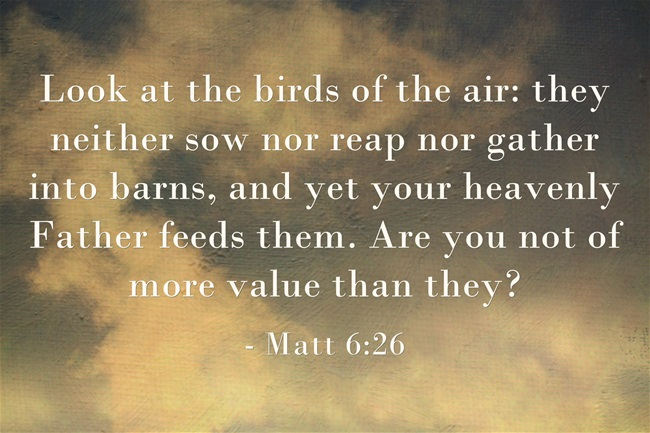 Reap We Scriptures Sow We More