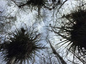 Cypress trees towering above, looking up from the center of the dome.