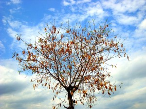 """A tree in autumn season"" by Arivumathi, CC 3.0"