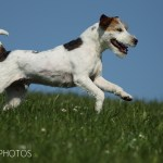 dogphotos-finn_005