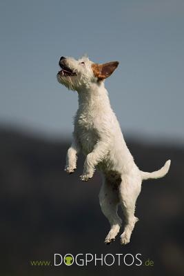 dogphotos-ylvi_004