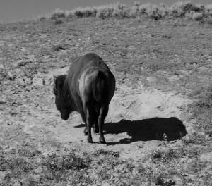 2016-30: Yellowstone