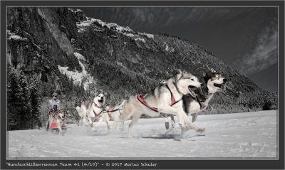 Hundeschlittenrennen Team 41 (4/10)