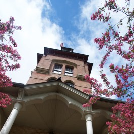 Upward looking view of Old Main through pink blossoming tree branches