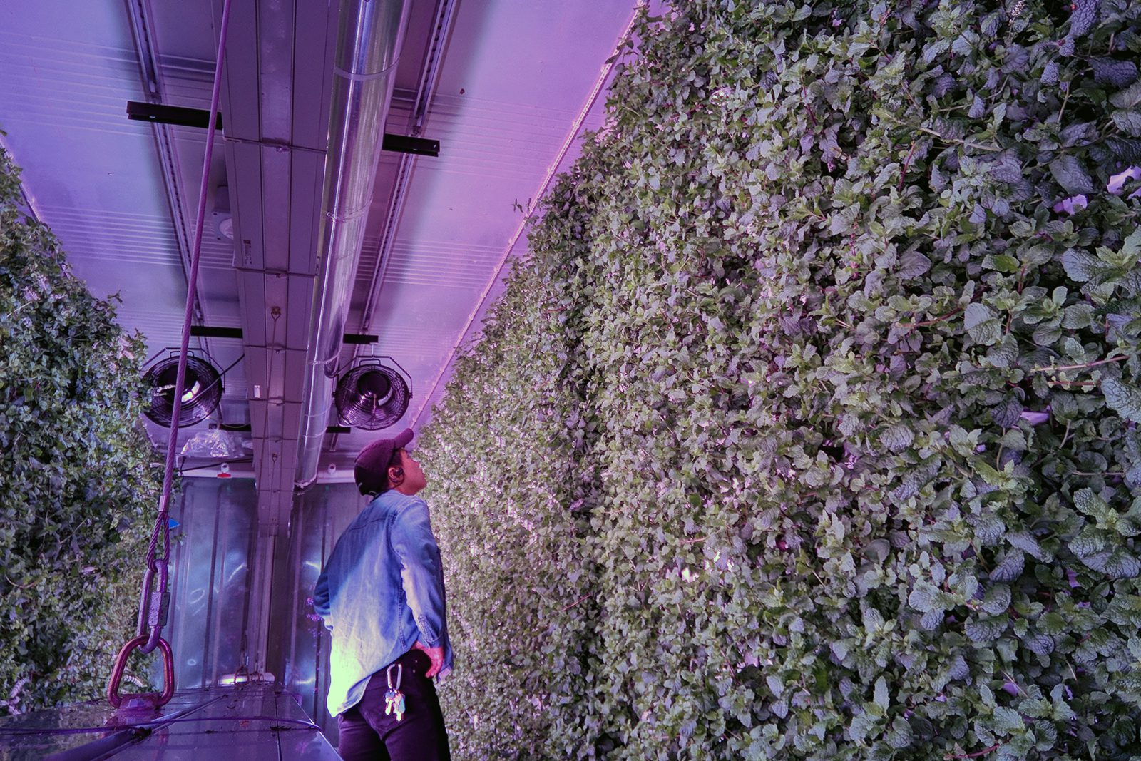 Micah Helle stands in front of plants growing on a wall in an indoor farming facility.