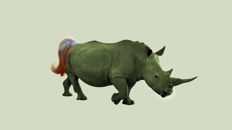Rhinocorn, a cross between a rhino and unicorn
