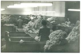 Setor de Classificação da lã. Laneira Brasileira S.A. Sem data.