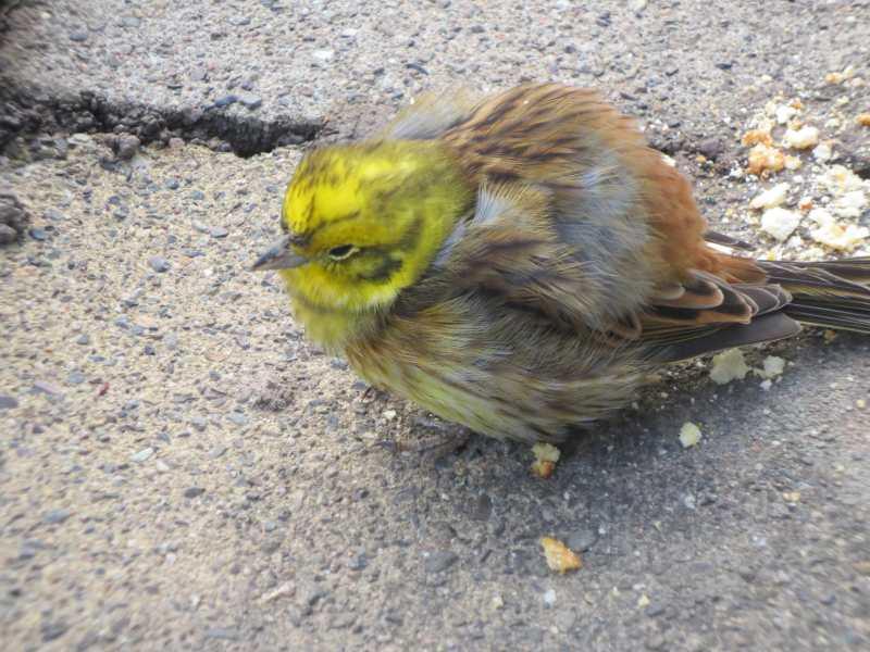 Vogel Aufgeplustert