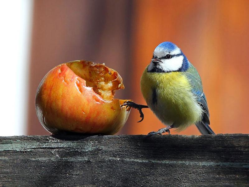 Wer Frisst Was Wildvogelhilfe Org
