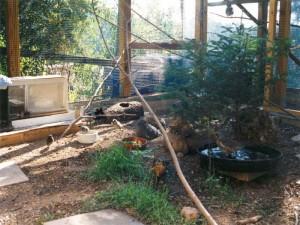 Artgerecht eingerichtete Voliere für nicht mehr auswilderbare Wildvögel,© Anke Dornbach