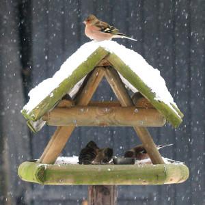 Verschiedene Singvögel am Futterhaus, © JPW. Peters / Pixelio.de