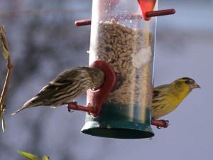Mit hängenden Silos lassen sich die Wildvögel besonders hygienisch füttern, © Rainer Hungershausen via Flickr