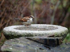 Ein Vogelbad beziehungsweise eine Vogeltränke sollte auf einer vogelfreundlichen Terrasse nicht fehlen. © a-mblomma / Pixabay