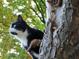 Es gibt Berichte über Katzen, die man erziehen konnte, sodass sie auch draußen keine Wildvögel angreifen, © Ktine01 / Pixabay