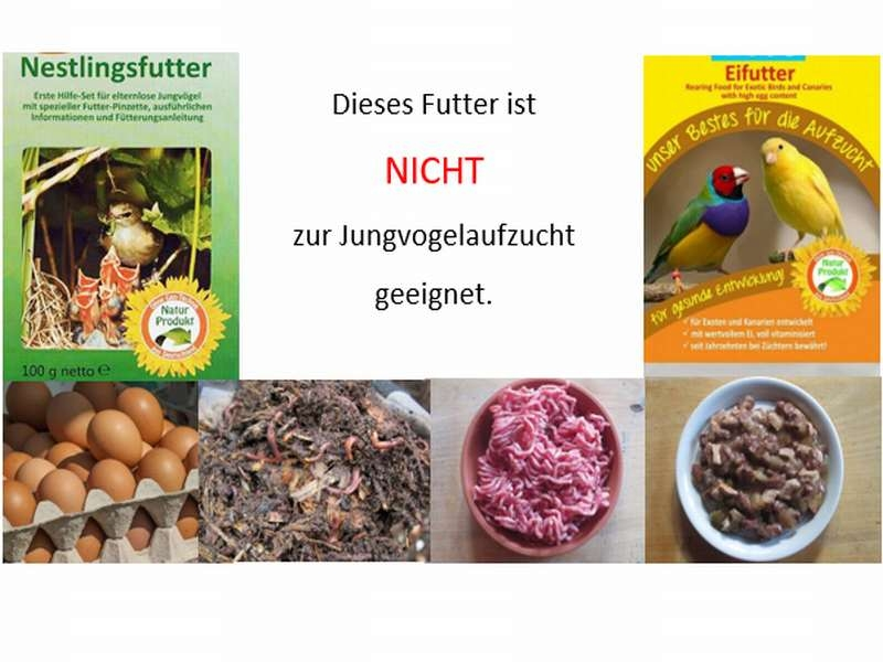 Für die Jungvogelaufzucht sind diese Futtermittel nicht geeignet, © Anke Dornbach