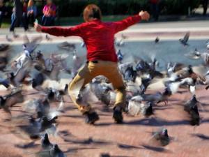 Tauben aufzuschrecken, ist für viele Kinder ein beliebter Zeitvertreib, unter dem die Tiere leiden, © JoaquinAranoa / Pixabay