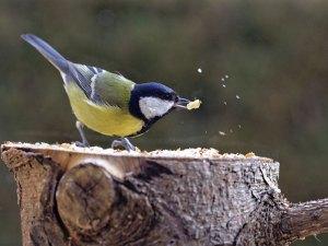 Wo gefressen wird, fliegen immer auch einige kleine Futterbestandteile umher, die die Umgebung beschmutzen, © Dieter Dr. Schitky / Pixelio.de