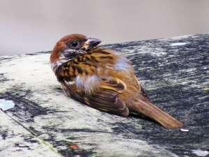 Ist ein Vogel beispielsweise flugunfähig, kann er nicht wieder ausgewildert werden, © Free-Photos / Pixabay