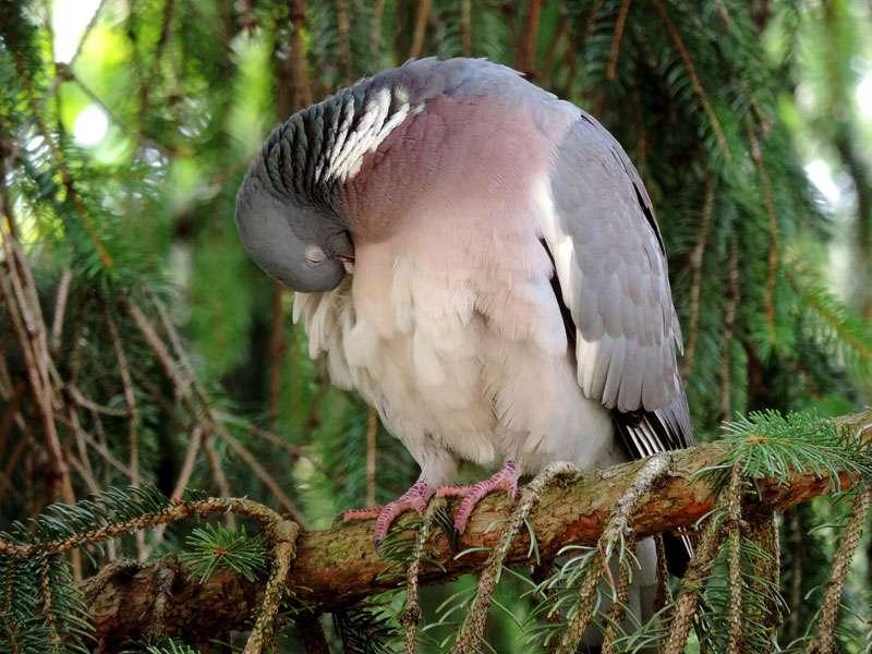Kuriose und spannende Fakten - Wildvogelhilfe.org