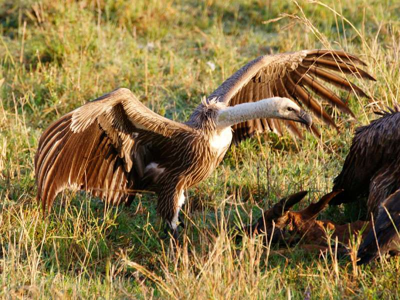 Große Rekorde Wildvogelhilfeorg