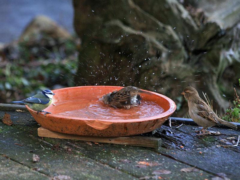 https://i2.wp.com/wp.wildvogelhilfe.org/wp-content/uploads/Vogeltraenke_Ch.-Kuchem_pixelio.jpg