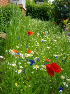 Bis Wildblumen wachsen, vergeht oft einige Zeit, wenn der Boden zuvor jahrelang regelmäßig gedüngt worden ist, © David Phillips via Flickr