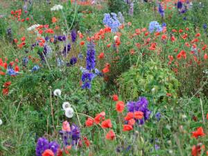 Eine Wildblumenwiese ist im Frühling und Sommer ein farbenfroher Anblick, © Pete - Seapaddler via Flickr