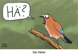 Der Häher, © Dorthe Landschulz