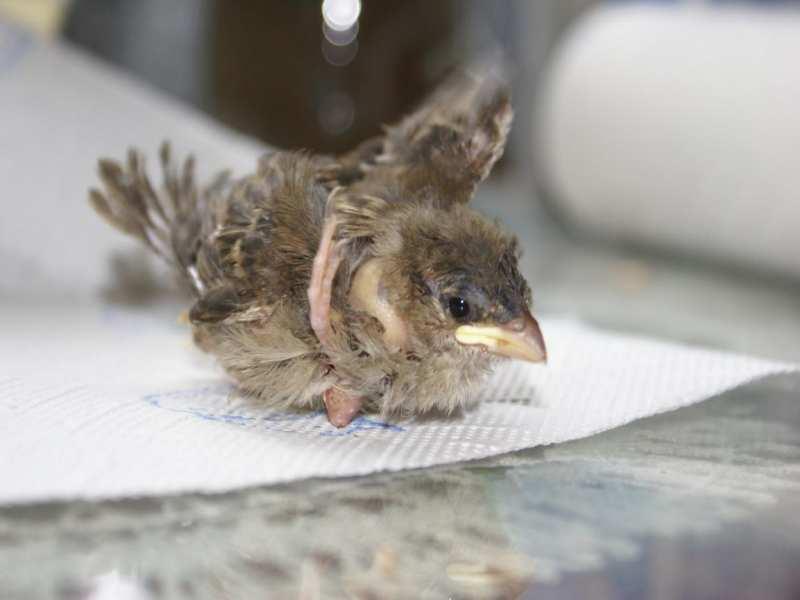 Anzeichen für Erkrankungen - Wildvogelhilfe org