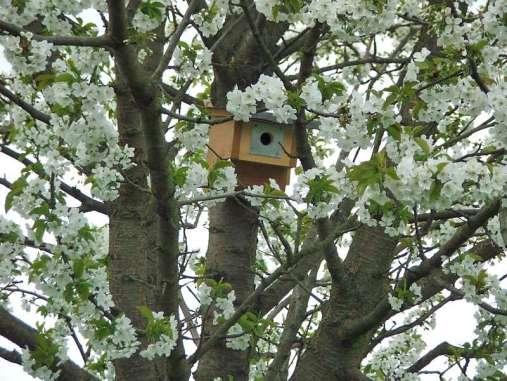 Auch Nisthilfen lassen sich in Obstbäumen anbringen, © Dagmar Offermann
