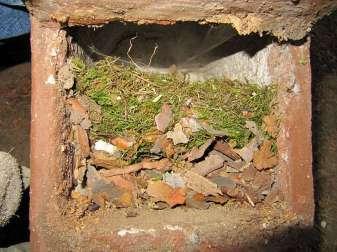 Nestschichten: In diesem Nistkasten hat zuerst ein Kleiber gebrütet (untere Schicht) und im Folgejahr haben Kohlmeisen den Kasten bezogen, © Claus Walter