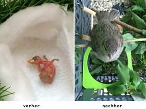 Vom Nestling zum Ästling, © Stefan und Birgitt Sattler