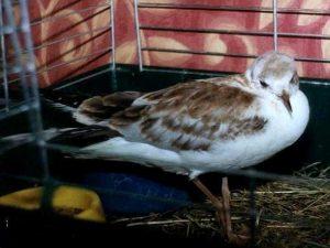 Die Betreuung eines verletzten Vogels kann sehr langwierig sein, © Anke Dornbach