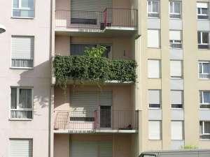 Ein begrünter Balkon fällt auf und wird nicht von jedem Vermieter gern gesehen, © Rüdiger Niemes