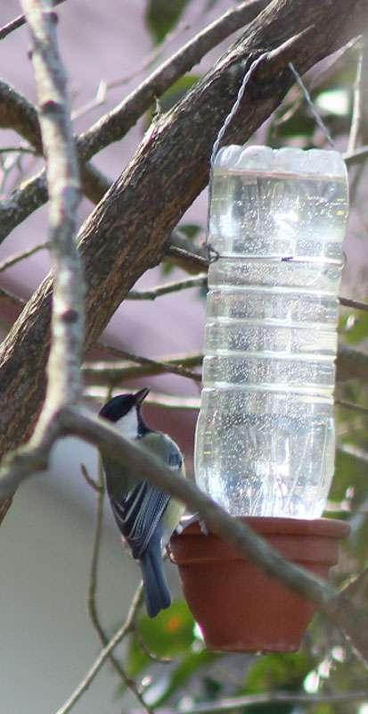 Selbst gebastelte Vogeltränke im Betrieb - hier wird sie von einer Kohlmeise besucht, © Uwe Borowski
