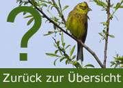 Zurück zur Übersicht Landvögel