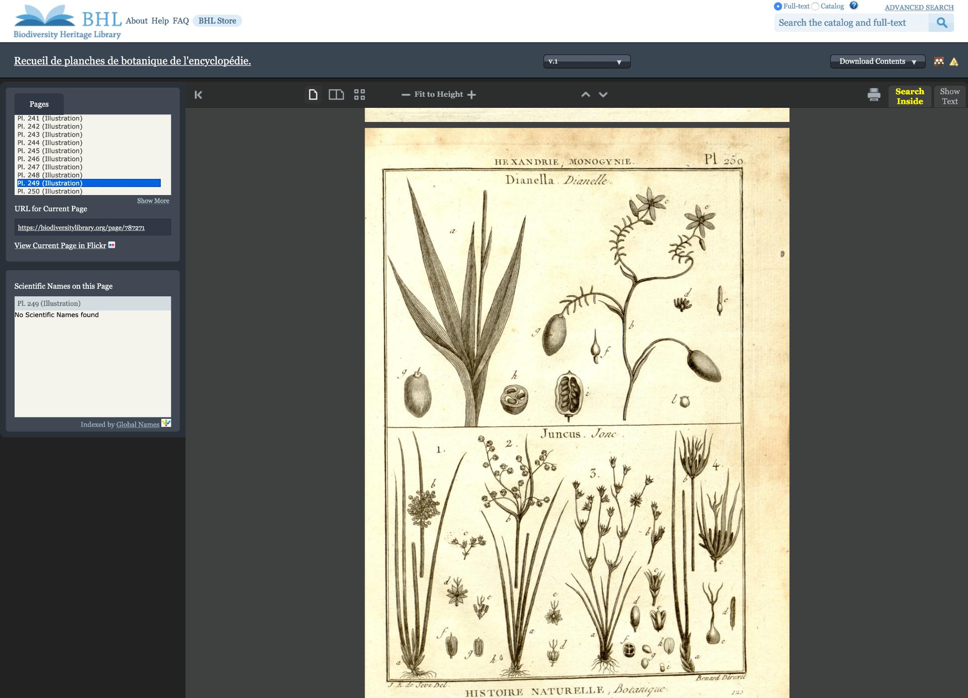 BHL screenshot of an vintage illustration of plants