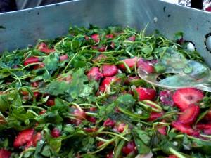 Ruccola & Erdbeeren 2