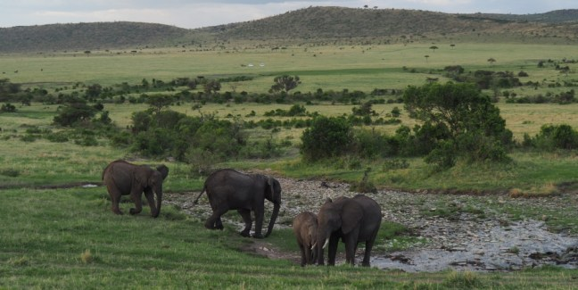 Elephants live in families