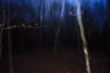 untitled (A forest)