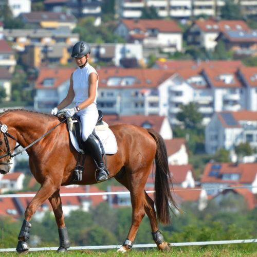 Reitturnier Reichenbach-Hochdorf 11.09.2011 10-07-27