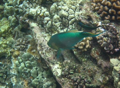 Cute Fish in Underwater