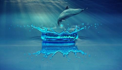 Dolphin in Underwater