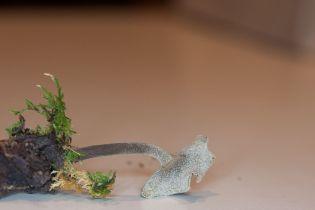 Helvella macropus, long stalked gray cup