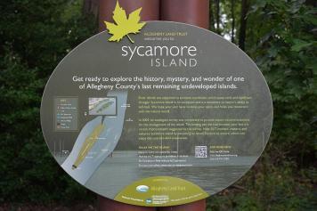 Sycamore_06