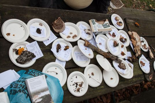 Identification table. Lots of smaller species.