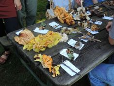 Mushroom identification table.