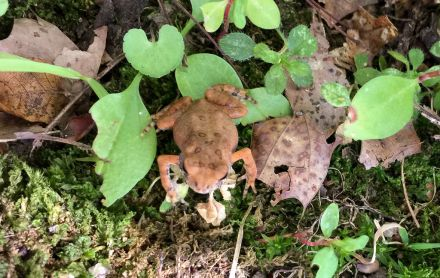 Not a toadstool, just a toad.